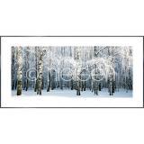 """Thumbnail von Gerahmte Kunst """"Birch Forest Snow"""" mit Alurahmen Alpha"""