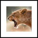 """Thumbnail von Gerahmtes Bild """"Lioness"""" mit Alurahmen C2"""