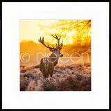 "Thumbnail von Gerahmtes Bild ""Cervine Sunset"" mit Alurahmen C2"
