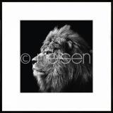 "Thumbnail von Gerahmte Kunst ""Lion black and white"" mit Alurahmen C2"