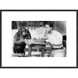 "Thumbnail von Gerahmte Kunst ""Monkey chess"" mit Holzrahmen Quadrum"