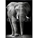 "Thumbnail von Gerahmte Kunst ""Elephant black and white"" mit Alurahmen Alpha"