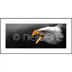 """Bilderrahmen Gerahmte Kunst """"Eagle"""" mit Alurahmen C2"""