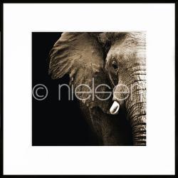 """Bilderrahmen Gerahmte Kunst """"Elephant"""" mit Alurahmen C2"""
