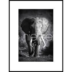 "Bilderrahmen Gerahmte Kunst ""Elephant black and white"" mit Alurahmen C2"
