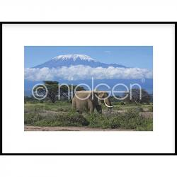 "Gerahmte Kunst ""Elephant Prairie"" mit Alurahmen C2"