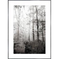 """Bilderrahmen Gerahmte Kunst """"Forest Black and White"""" mit Alurahmen Alpha"""