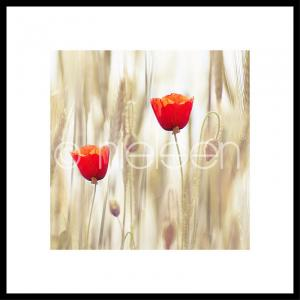 "Gerahmte Kunst ""Flower Cornfield"" mit Alurahmen C2"