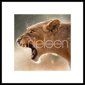 """Gerahmte Kunst """"Lioness"""" mit Alurahmen C2"""