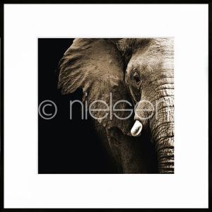"Gerahmtes Bild ""Elephant"" mit Alurahmen C2"