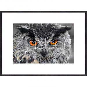 "Gerahmte Kunst ""Owl"" mit Holzrahmen Quadrum"