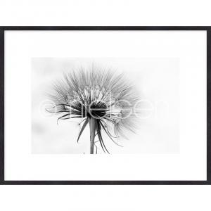 "Gerahmte Kunst ""Dandelion abstract"" mit Holzrahmen Quadrum"