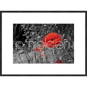 """Gerahmtes Bild """"Red Poppy Flower"""" mit Holzrahmen Quadrum"""