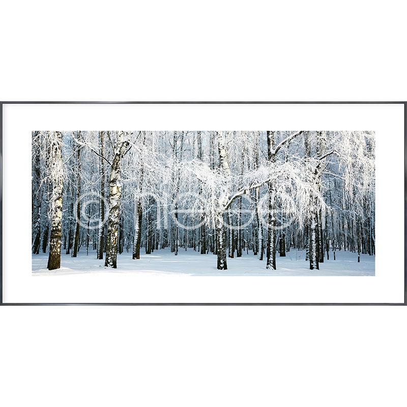 """Gerahmte Kunst """"Birch Forest Snow"""" mit Alurahmen Alpha"""