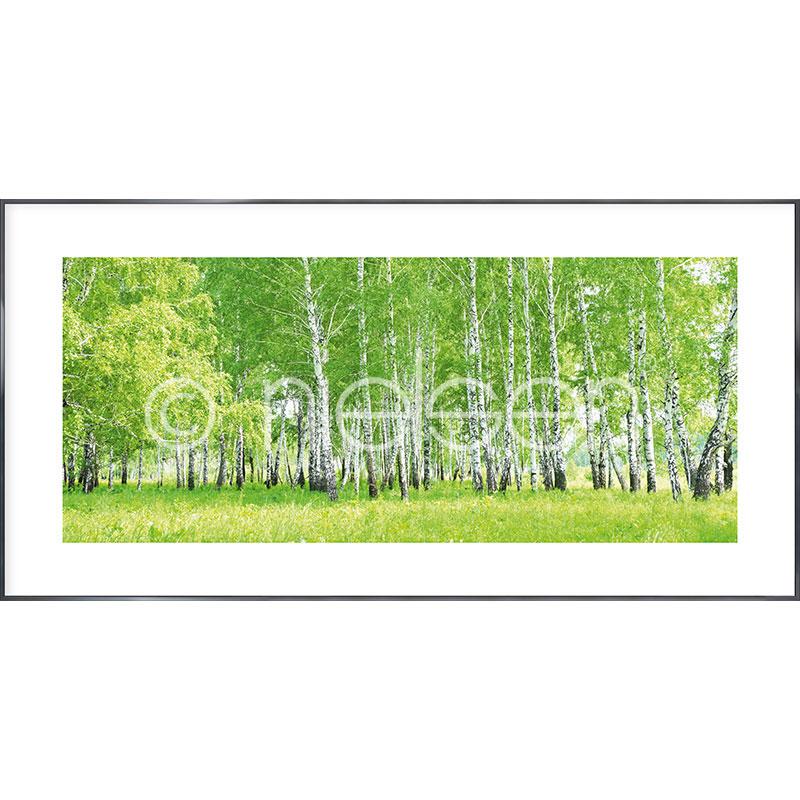 """Gerahmte Kunst """"Birch Forest"""" mit Alurahmen Alpha"""