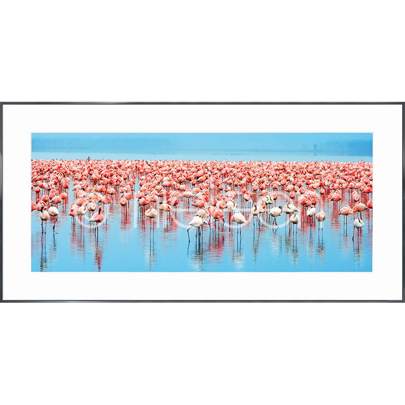 "Gerahmte Kunst ""Flamingos"" mit Alurahmen Alpha"
