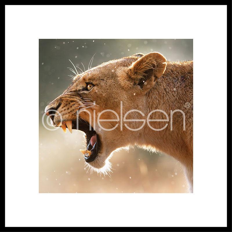 """Gerahmtes Bild """"Lioness"""" mit Alurahmen C2"""