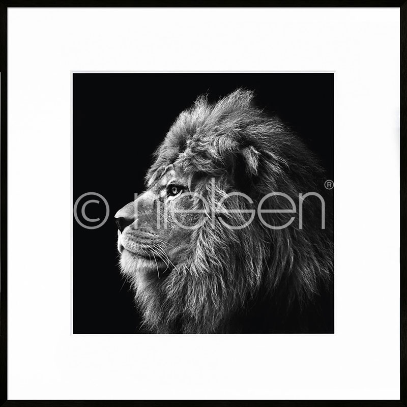 "Gerahmte Kunst ""Lion black and white"" mit Alurahmen C2"