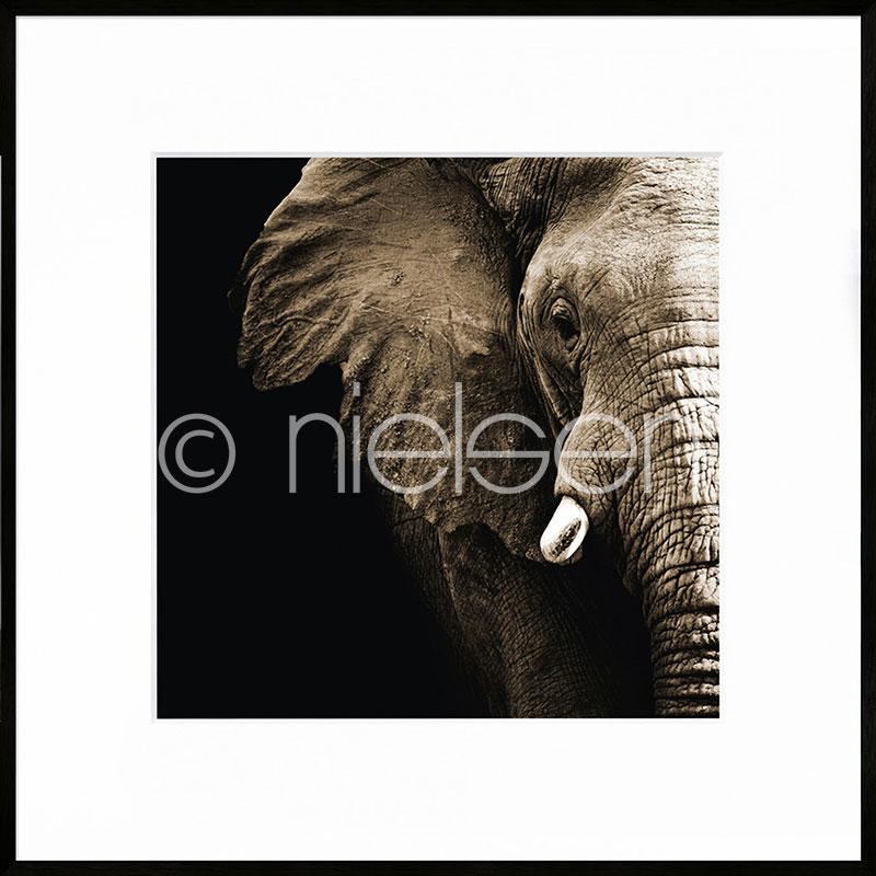 "Gerahmte Kunst ""Elephant"" mit Alurahmen C2"