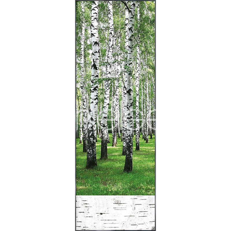 """Gerahmtes Bild """"Birch Forest"""" mit Alurahmen Alpha"""
