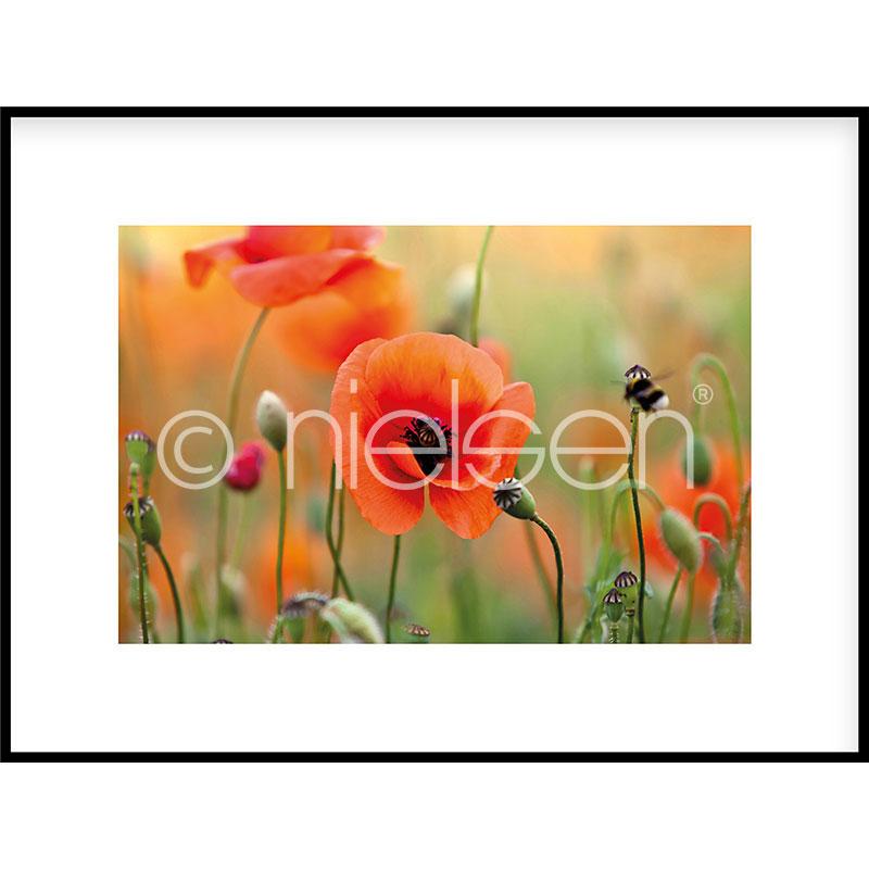 """Gerahmte Kunst """"Poppy Flower"""" mit Alurahmen C2"""