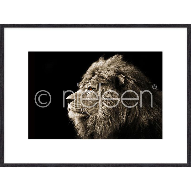 "Gerahmtes Bild ""Lion black and white"" mit Holzrahmen Quadrum"