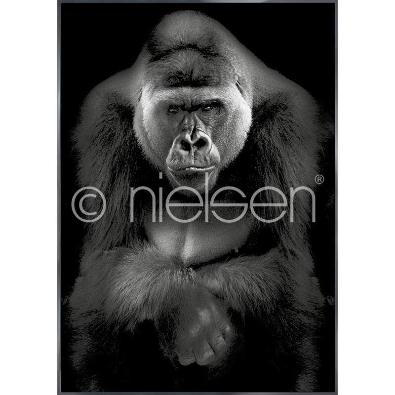 """Gerahmtes Bild """"Gorilla"""" mit Alurahmen Alpha"""