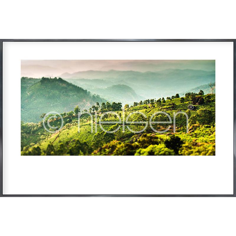 """Gerahmte Kunst """"Landscape of Tea Plantations"""" mit Alurahmen Alpha"""