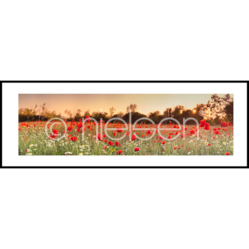 """Gerahmte Kunst """"Poppy Flower Field"""" mit Alurahmen C2"""